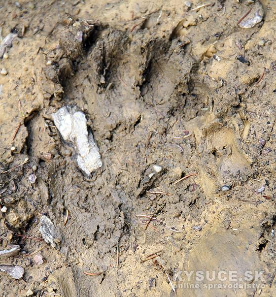 Medvedie stopy - Kysuce