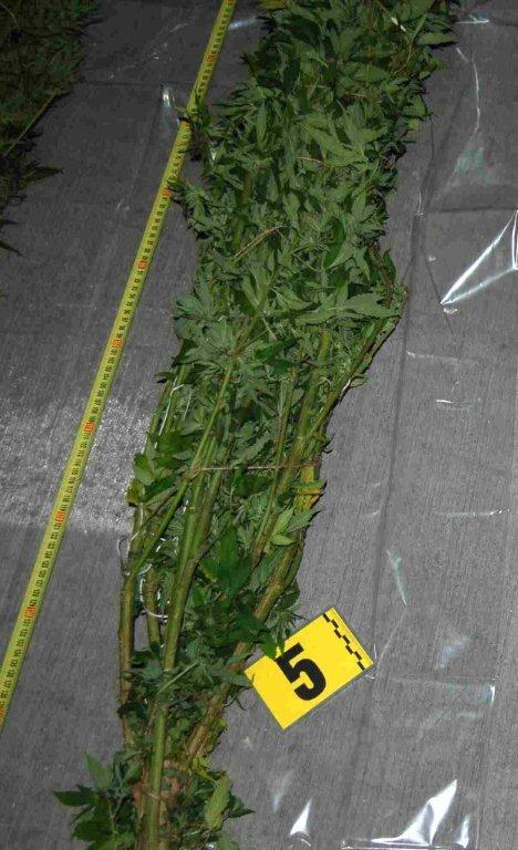 azdrzana-marihuana-policia-krasno-nad-kysucou-2018-4.jpg