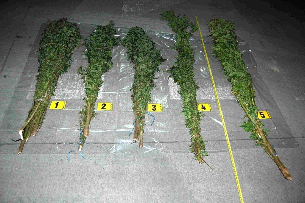 azdrzana-marihuana-policia-krasno-nad-kysucou-2018-5.jpg