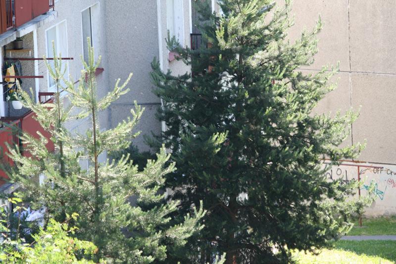 roj-vciel-kycerka-cadca-2009-1.jpg