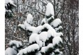 zima-kysuce-2009-22.jpg