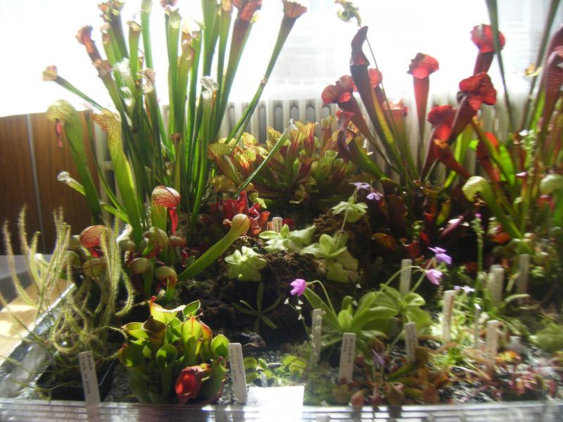 vystava-ovocia-zeleniny-2012-nova-bystrica-2.jpg
