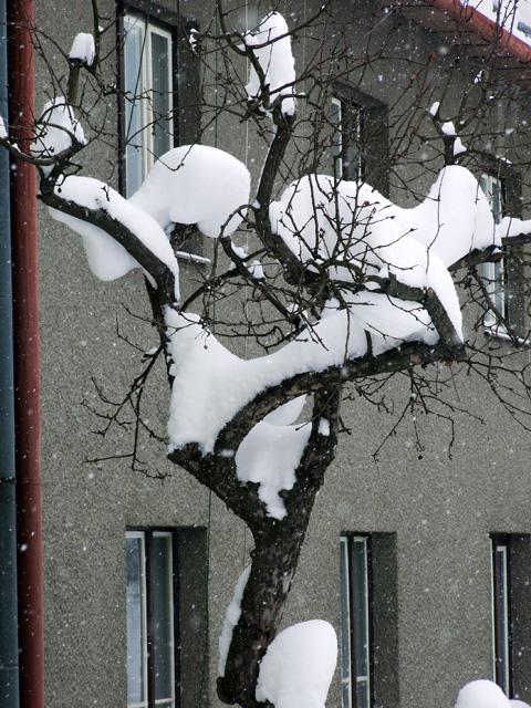 zima-kysuce-2009-18.jpg