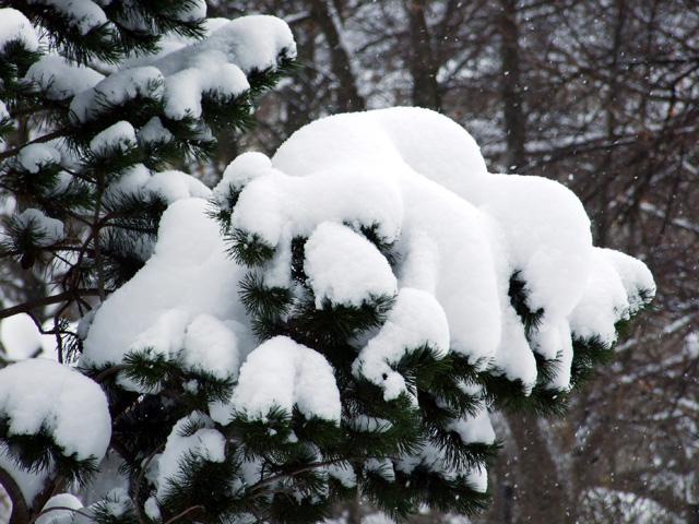 zima-kysuce-2009-23.jpg