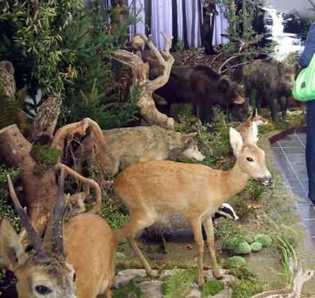 Prvá výstava v Spoločnej prírodovednej expozícií o jedoch v prírode