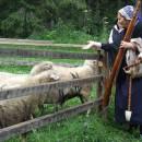 Chovateľský deň v skanzene Vychylovka s výstavou pôvodných slovenských plemien