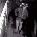 Video: Mladíka, ktorý poškodil autá, zachytila priemyselná kamera. Poznáte ho?
